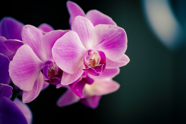 Orchid VPN Goes Live With Desktop App for Mac Users